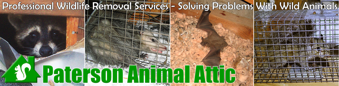 Paterson Animal Attic